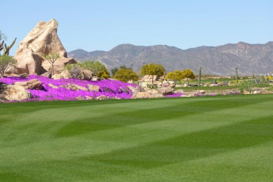 Desert Springs Golf Club 649
